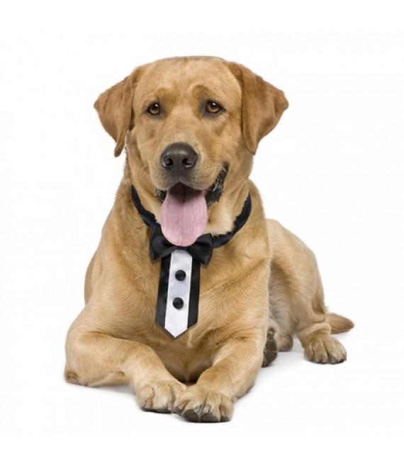 Tuxedo Dog Collar (WG135) - The Beautiful Bride Shop