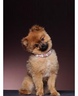 Poirier SAM-03 Dog Ribbon